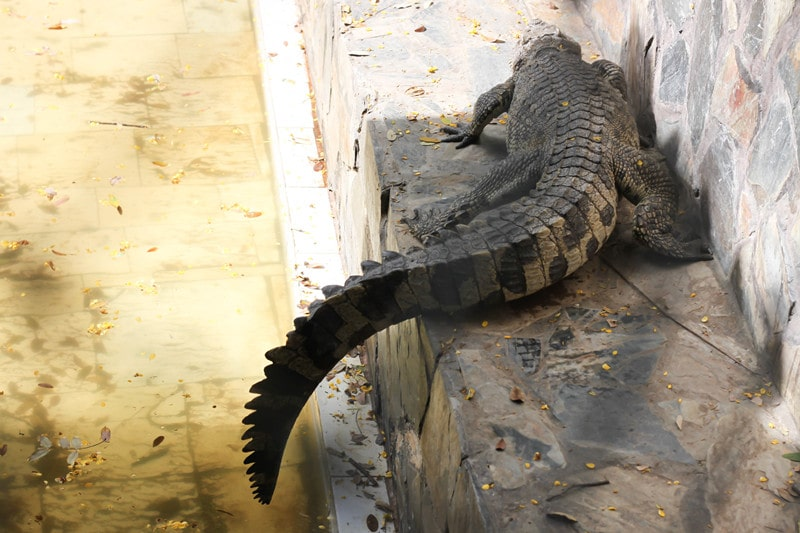How to Get Rid of Alligators