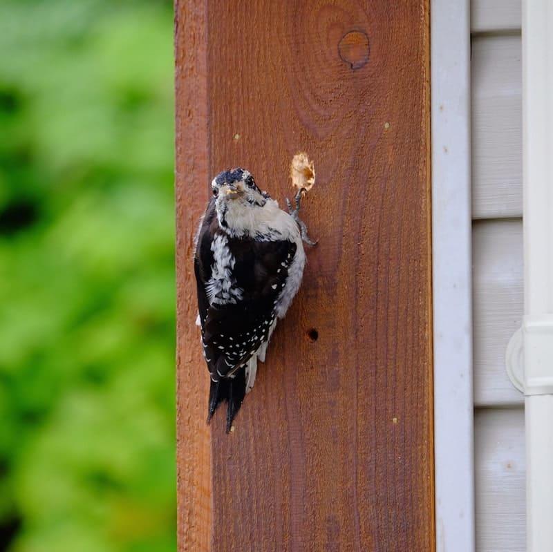 How to Keep Birds Away