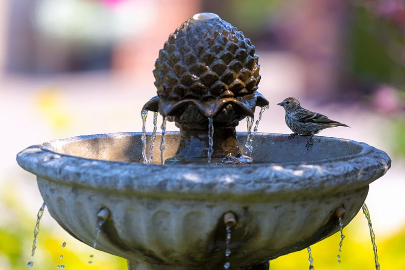 Everything You Need to Know About Backyard Fountains