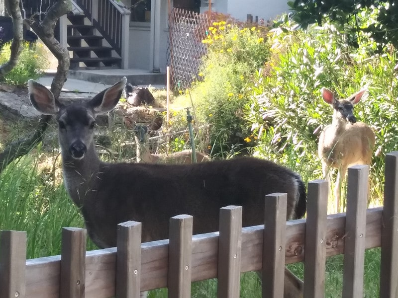 How to Get Rid of Deers in House