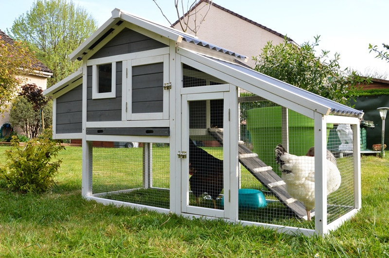 Every Homeowner Needs to Know About Backyard Chicken Coops