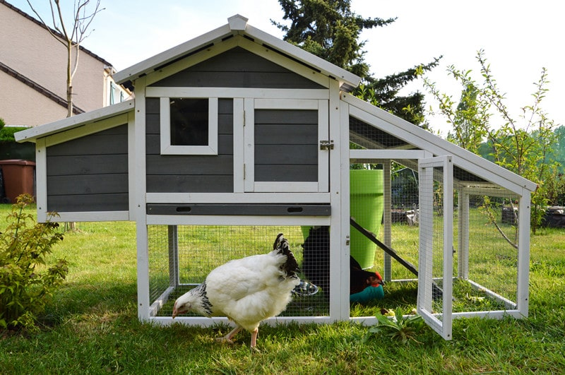 The Best Backyard Chicken Coops