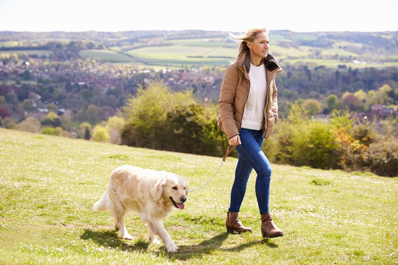 Caring for Pregnant Golden Retrievers