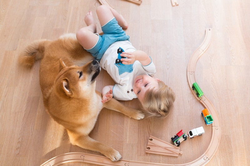 Are Shiba Inus Good with Kids