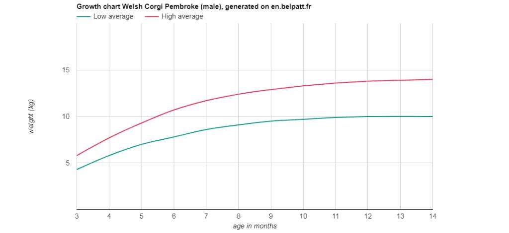 Growth-graph-of -Corgi-male