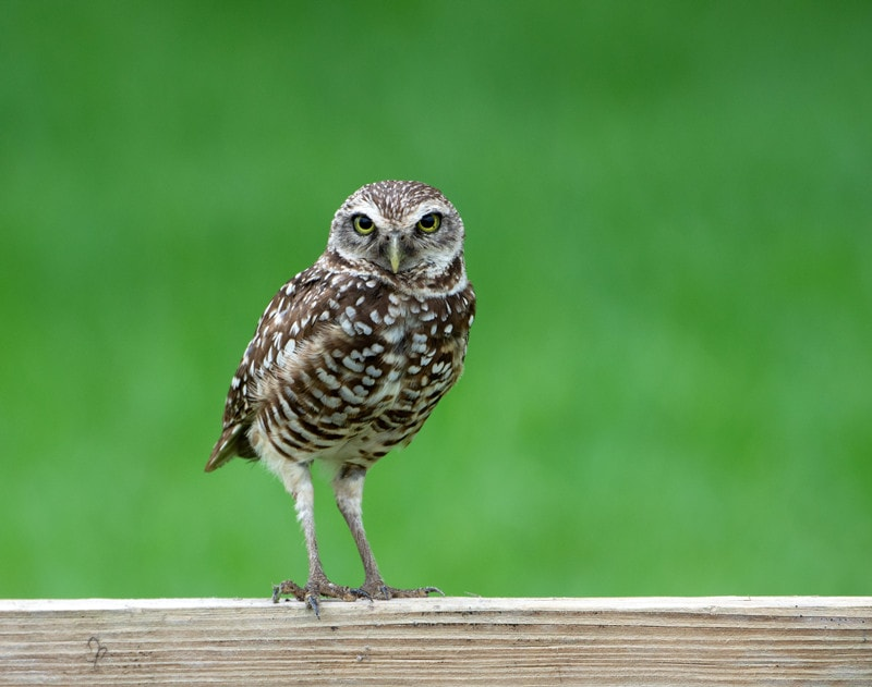 10 Cool Owls Legs and Talons Facts