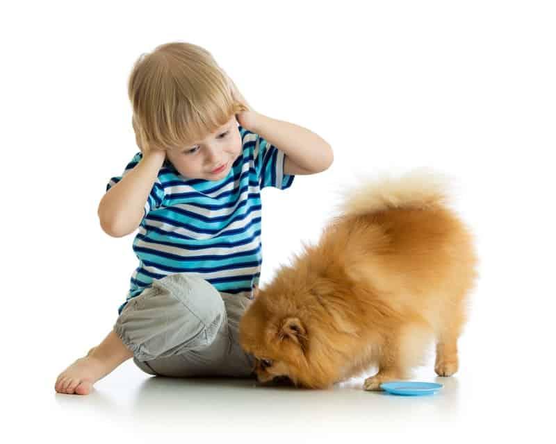 Are Pomeranians Good Service Dogs