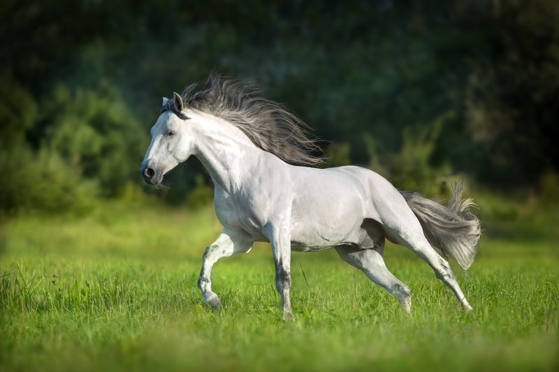 Are Andalusian Horses Good for Beginners