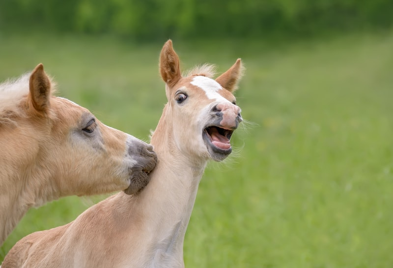 Are Horses Born With Teeth