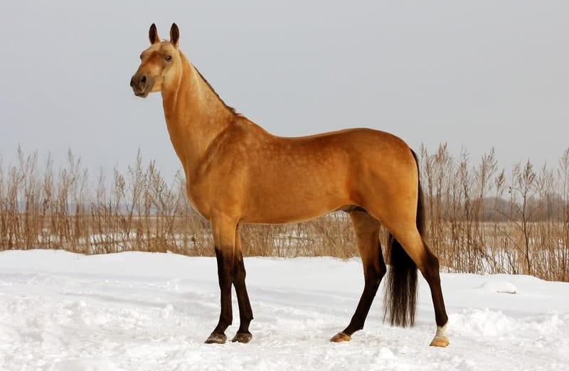 Bay Dun Horses