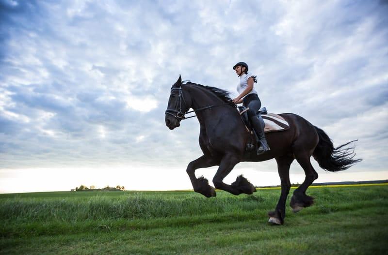 How Fast Can Friesians Run