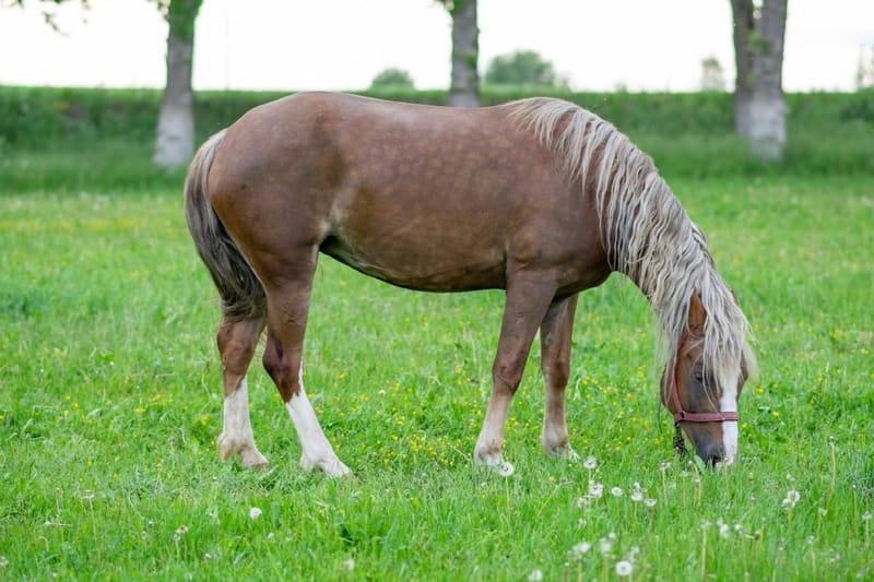 Silver Bay Horses
