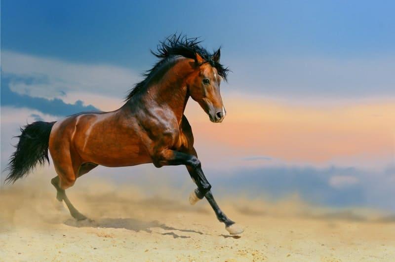7 Fastest Horse Breeds