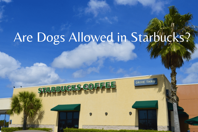 Are Dogs Allowed in Starbucks