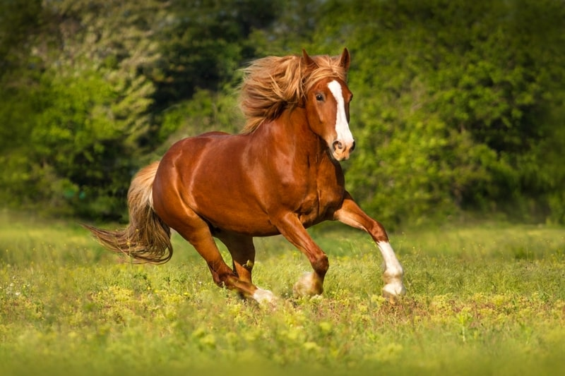 How Fast Can a Horse Run