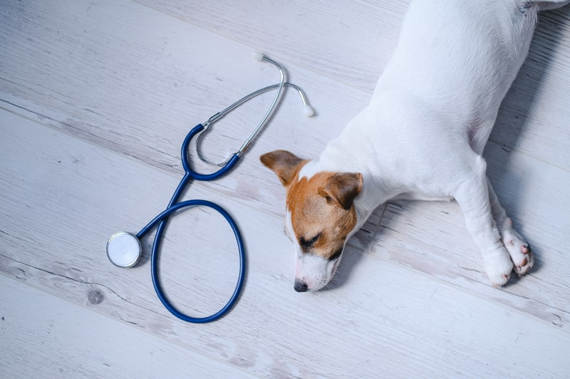 When to Euthanize A Dog With Kidney Failure