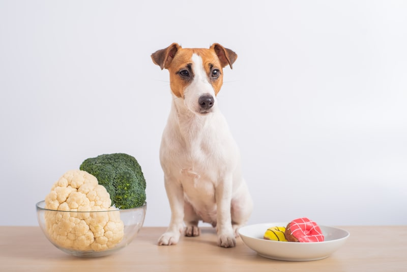 Can Dogs Eat Cauliflower