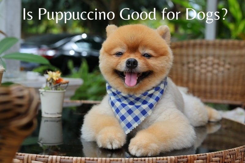 Is Puppuccino Good for Dogs