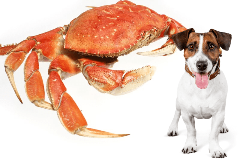 Can Dogs Eat Crabs