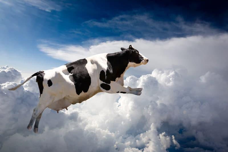 Can Cows Jump