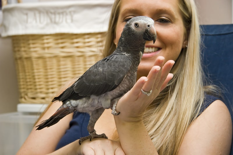 Do African Greys Like to be Handled