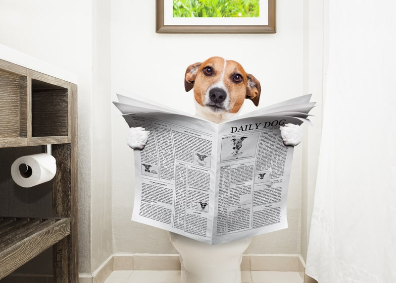 How Long Can Dogs Hold Their Poop