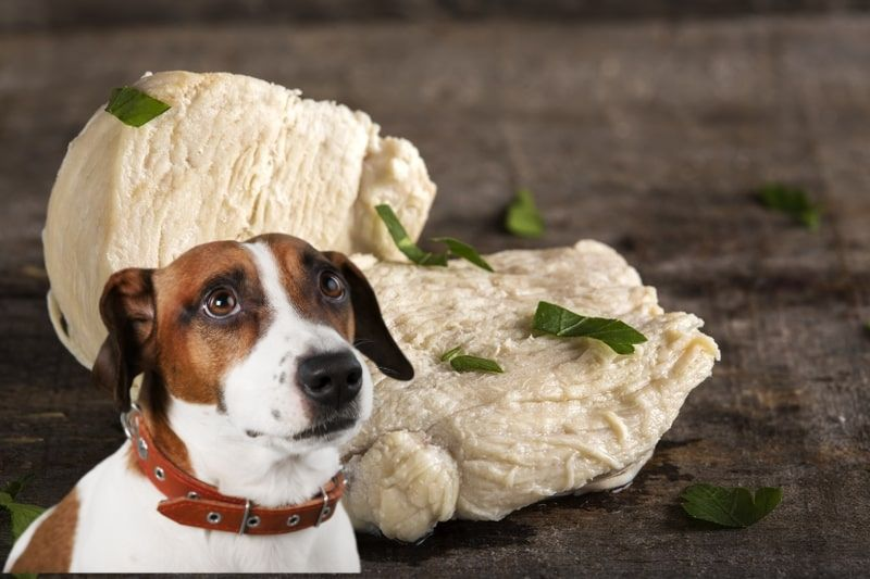 Is Boiled Chicken Good For Dogs