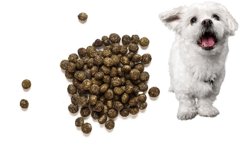 Is it Harmful for a Dog to Eat Rabbit Poop