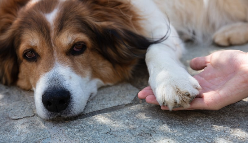 Spondylosis in Dogs